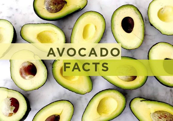 24c10d9bea675 Avocado Facts